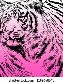 Big tiger design on purple background. JPEG format.