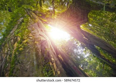 big tree in the Borneo