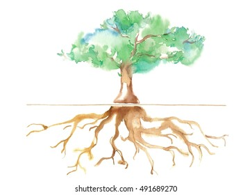 Big tree and root