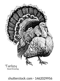 Big Turkey bird black pen hand drawing