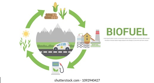 Biofuel Life Cycle, Biomass Ethanol From Corn, Sugarcane, Wood, Flat Design Concept Illustration . Isolated on the White Background.