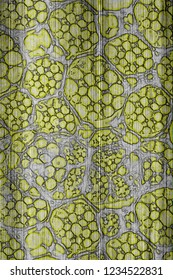 Biomaterial - Biopolymer - Abstract Illustration