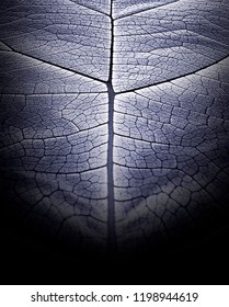 Biomimicry - Biomaterials - Symmetry