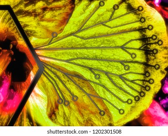 Biomimicry - Nature and Biotechnology - Hybrid Nature - Abstract Illustration