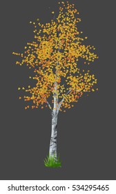 birch in the autumn isolated