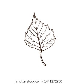 Birch leaf. vintage engraved illustration. Isolated on white background birch autumn drawing leaf. Isolated object. Hand drawn detailed botanical illustration. closeup