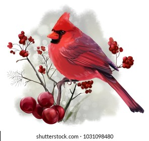 Bird Cardinal sitting on a branch watercolor illustration