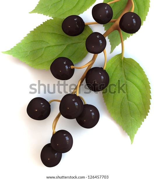 Bird Cherry Branch Berries Isolated On Stock Illustration