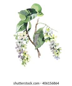 bird cherry branch watercolor