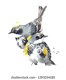 Bird couple warbler little creatures watercolor painting illustration isolated on white background