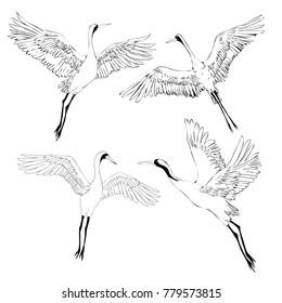 bird crane illustrations. White stork . isolated object