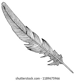 bird feather from wing isolated. Isolated illustration element. feather for background, texture, wrapper pattern, frame or border.