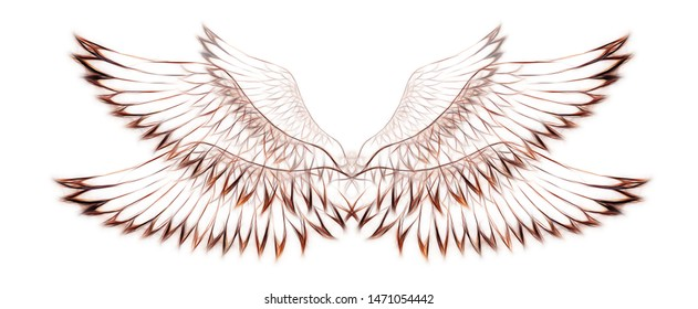 bird feathers on white background. Original drawing and computer effect.