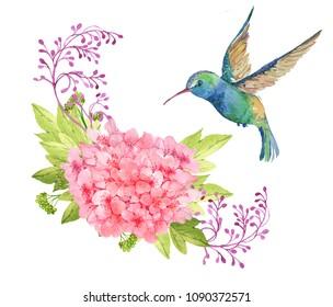 Bird Hummingbird, and pink flower.watercolor