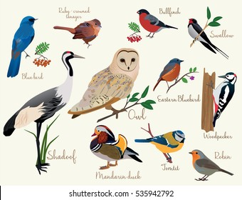 bird icons. Colorful realistic birds icons set