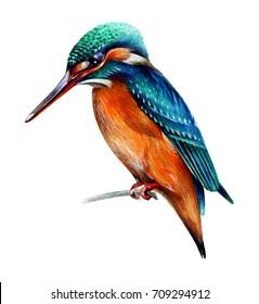 bird kingfisher painted in watercolor technique