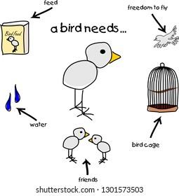 A bird needs...