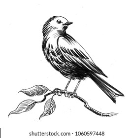 Bird on the tree branch. Ink black and white illustration
