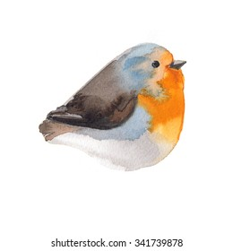 Bird painted on watercolor paper. Etude birds on a white background. Bird robin