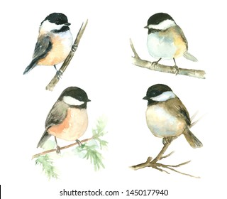 Bird painting Set Chickadee Tit Watercolor on branch hand drawn illustration isolated on white background