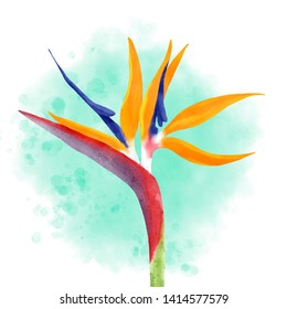 Bird  of Paradise flower realistic illustration