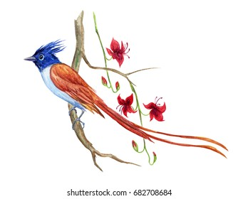 A bird of paradise on a branch of an exotic plant with flowers, watercolor drawing on a white background.