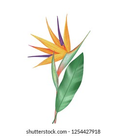 Bird of paradise, Strelitzia flower in watercolor style