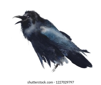 Bird raven black bird calling crow watercolor painting illustration isolated on white background