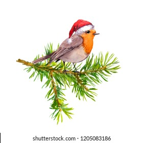 Bird in red holiday hat on christmas tree branch. Watercolor