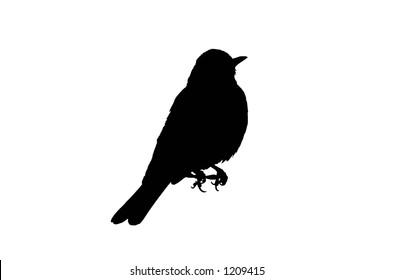 bird robin silhouette Images, Stock Photos & Vectors ...