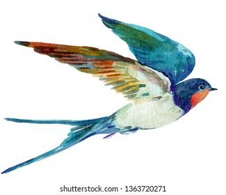 Bird swallow watercolor illustration