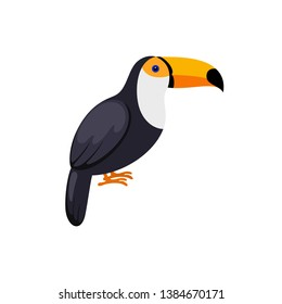 Bird Toucan in flat style on white background.