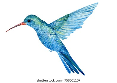 bird watercolor Hummingbird.illustration of watercolor hand painting