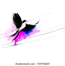 Bird watercolor illustration. A black and white bird flying isolated on pink background.