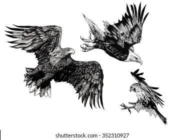 BIRDS EAGLE AND FALCON