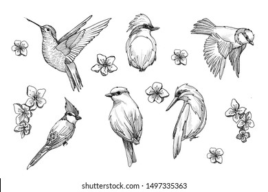 birds. little birds. graphics. Spring. black and white drawings