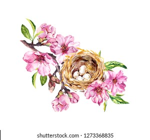 Birds nest with eggs on springtime branch with spring flowers. Cherry, sakura flowers, pink apple blossom. Floral watercolor