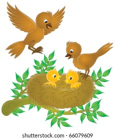 Birds and nestlings in their nest