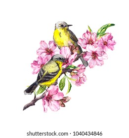 Birds on blossom branch with pink apple, cherry flowers (sakura). Watercolor flowering tree