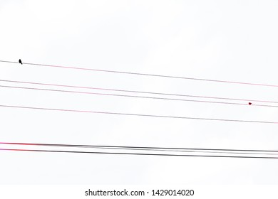 Birds silhouette on eletrical wire with black and pink colors in a white background