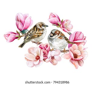 Birds of sparrows sitting on a blooming spring branch of a pink magnolia. Pink flowers isolated on white background. Illustration Watercolor. Template. Card