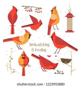 Birdwatching, bird feeding icon set. Red Northern cardinals pose comic flat cartoon. Birds straw nest, feeder, sunflower seeds. Minimalism simplicity design. Wildlife banner sign illustration
