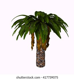 Bjuvia Tree 3D Illustration -  Bjuvia simplex is a cycadale plant with a simple leaf pattern that resembles that of Taeniopteris, an archaic tree fern.