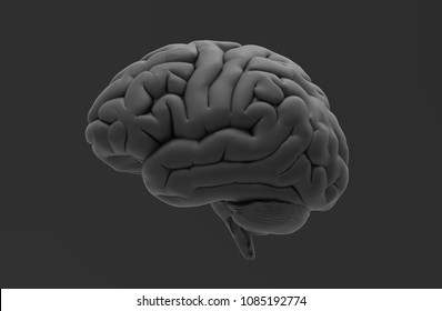 Black 3D human brain rendering isolated on dark gray background with clipping path for diecut to use in any backdrop