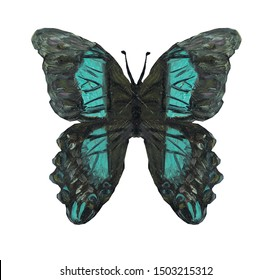Black and aquamarine butterfly on white background in jpeg (oil painting)