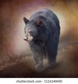 Black Bear walking. Watercolor painting