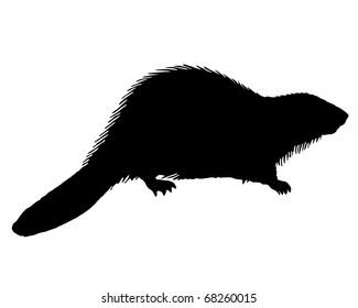 Black Beaver