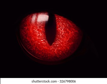 A Black cat red eye glowing in the dark. The red eye glowing in the darkness isolated on black. Halloween spook.