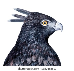 Black crested hawk eagle sketchy illustration. Symbol of courage, freedom, leadership and authority, vision and wisdom. Handdrawn watercolour graphic drawing, isolated element for creative design.
