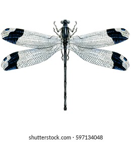Black dragonfly isolated, watercolor illustration on white, top view